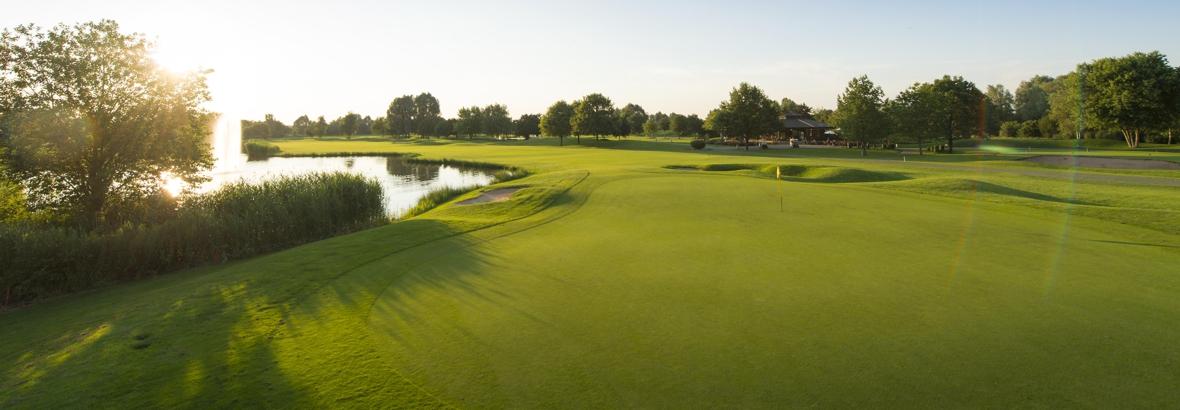 Golfrasen